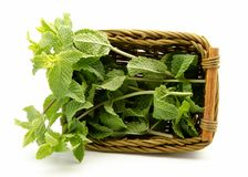 Mint leaves in a basket Stock Photography