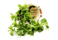 Mint leaves in a basket Royalty Free Stock Photo