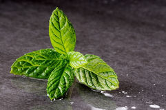 Mint leaves on black Stock Images