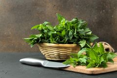 Mint. Leaves and branches of fresh green wild mint on a cutting board on a black concrete table. Mint. Leaves and branches of fresh green wild mint on a cutting royalty free stock images