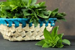 Mint. Leaves and branches of fresh green wild mint in a basket on a black concrete table. close-up stock images