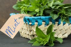 Mint. Leaves and branches of fresh green wild mint in a basket on a black concrete table. close-up stock photo