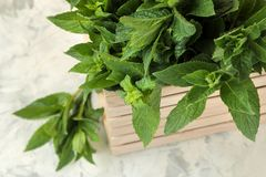Mint. Leaves and branches of fresh green wild mint in a box on a light concrete table stock photos