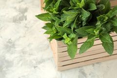 Mint. Leaves and branches of fresh green wild mint in a box on a light concrete table royalty free stock image