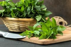 Mint. Leaves and branches of fresh green wild mint on a cutting board on a black concrete table stock photography
