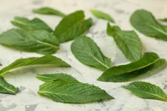 Mint. Leaves and branches of fresh green wild mint on a light concrete table. close-up stock photos