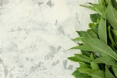 Mint. Leaves and branches of fresh green wild mint on a light concrete table. frame. top view stock image