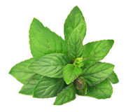 Mint leaves close up Stock Images