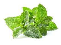Mint leaves in closeup stock images