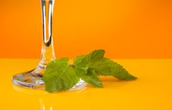 Mint leaves for cocktail Stock Image
