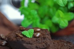 Mint leaves on coffee grounds. Brown coffee grounds are topped with green mint leaves and some coffee beans.This is a picture of the main body of the coffee royalty free stock photography