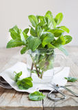 Mint leaves in cup Royalty Free Stock Photo
