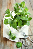 Mint leaves in cup Royalty Free Stock Images