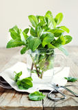 Mint leaves in cup Stock Photography