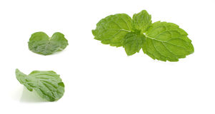 Mint leaves and drug isolated on white background Royalty Free Stock Photo