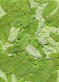 Mint leaves. Stock Photography