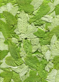 Mint leaves. Stock Photo