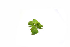Mint leaves. . Mint leaves. Food ingredients and procedures vietnamese Meatball Wraps Nam Neung with rice paper rolls stock photo