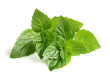 Mint leaves. Fresh mint leaves in closeup Royalty Free Stock Photo