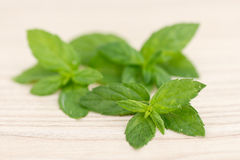 Mint leaves. Royalty Free Stock Images