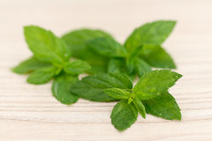 Mint leaves. Royalty Free Stock Photo