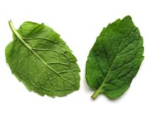 Mint Leaves - front and back Stock Photography