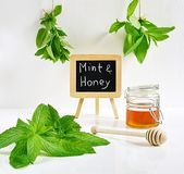 Mint leaves with honey Stock Images