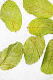 Mint leaves in ice Royalty Free Stock Photos