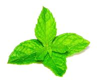 Mint leaves ISOLATED royalty free stock photo