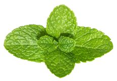Mint leaves isolated without shadow.  Royalty Free Stock Images