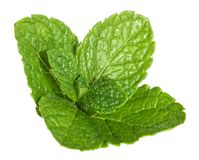 Mint leaves isolated without shadow Stock Photo