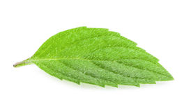 Mint leaves isolated Stock Photography