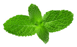 Mint leaves isolated on the white background Stock Photo