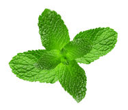 Mint leaves isolated on the white background Royalty Free Stock Image