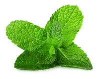 Mint leaves isolated on the white background Royalty Free Stock Images