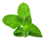 Mint leaves isolated on the white background Stock Images