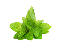 Mint leaves isolated on white Stock Images