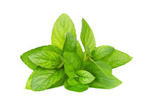 Mint leaves isolated on white Royalty Free Stock Photos