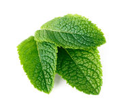 Mint leaves isolated on white Stock Image