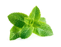 Mint leaves isolated on white Royalty Free Stock Image
