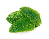 Mint leaves isolated on white. Background Stock Images
