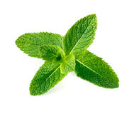 Mint leaves isolated on white. Background Royalty Free Stock Photo