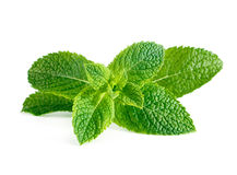 Mint leaves isolated on white. Background Royalty Free Stock Photography