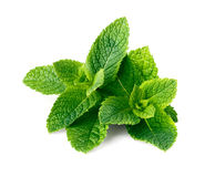 Mint leaves isolated on white. Background Stock Photo