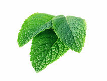 Mint leaves isolated on white Stock Photography