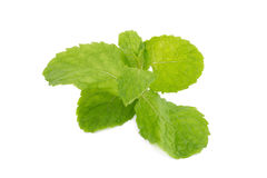 Mint leaves isolated on white background. Royalty Free Stock Images