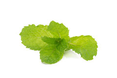 Mint leaves isolated on white background. Stock Image