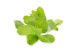 Mint leaves isolated on white background. Royalty Free Stock Image