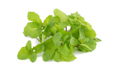 Mint leaves isolated on white background. Royalty Free Stock Photo