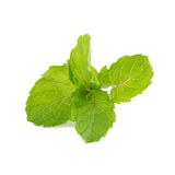 Mint leaves isolated on white background. Stock Photos
